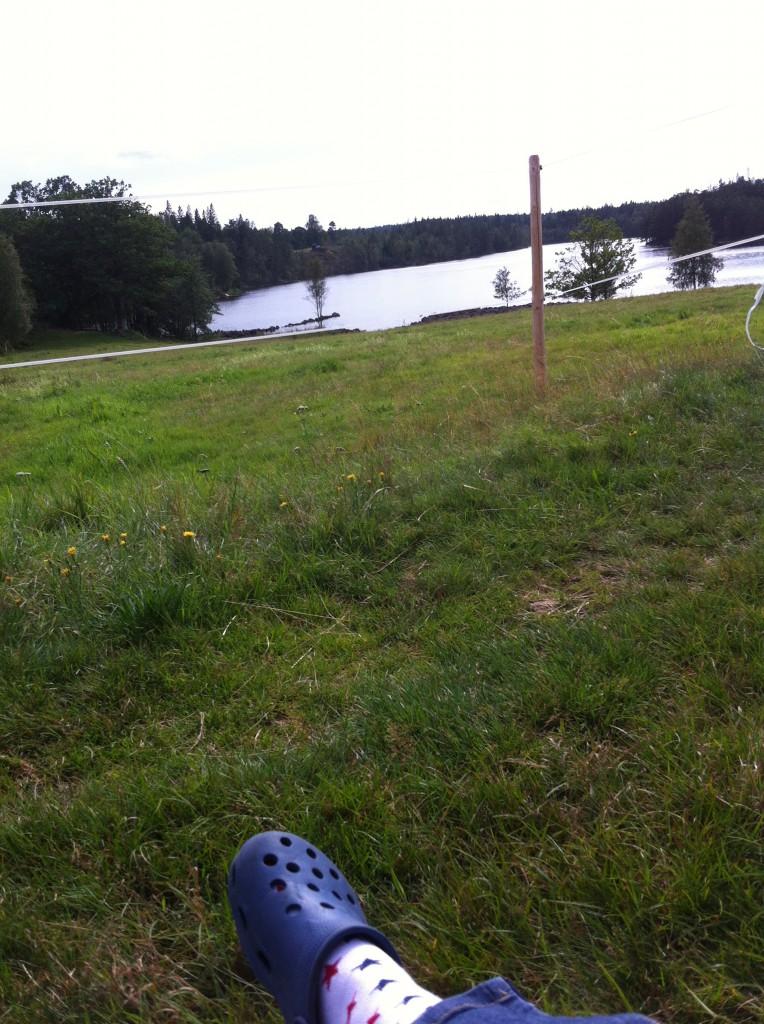 utsikt över hästgården och en liten sjön.